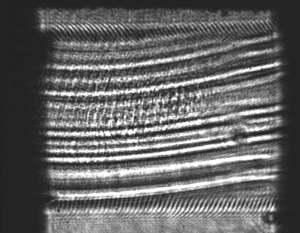Striated structure of multicomponent langasite crystal sample (XZ-plane)