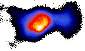 Figure of an animal after the magnetic irradiation by a flat applicator